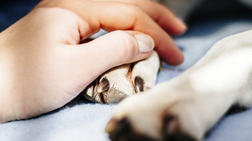 ¿Qué tan solicitados son los veterinarios en el extranjero?