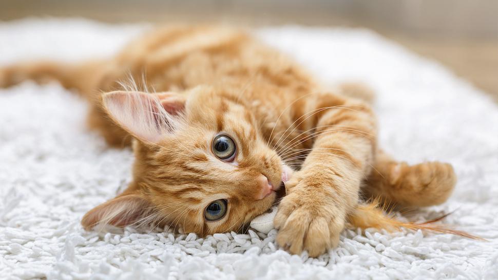 ¿Sabías que tu mascota puede tener un plan de salud?