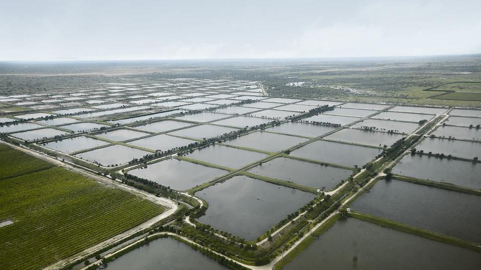 Agroindustria: 4 acciones para recuperar el dinamismo del sector